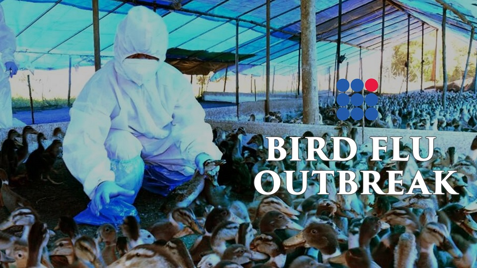 Bird Flu Outbreak Recorded In India