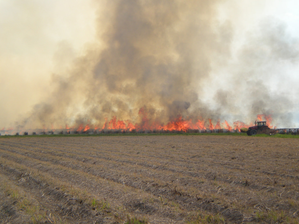 Stubble burning in Punjab: Is there a way ahead?