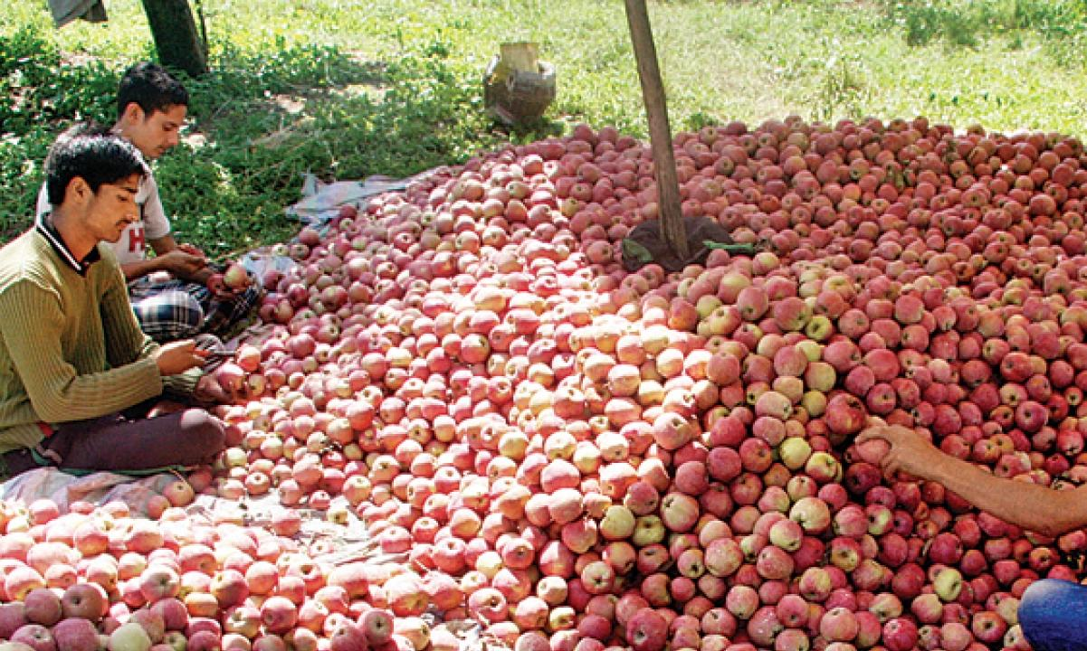 Apple trade decreases due to Kashmir lockdown