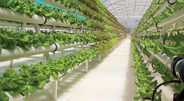 Turn Africa's cities into vertical farms - NewsDay Zimbabwe